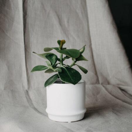Storefactory pot Maras wit small