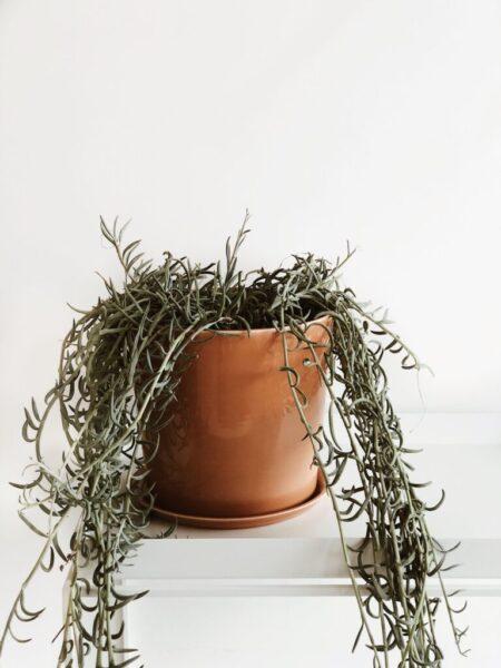 Hay Botanical Family set XL Caramel